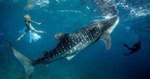 Prečo žralok žil a ako ho interpretovať vo snovovej knihe?