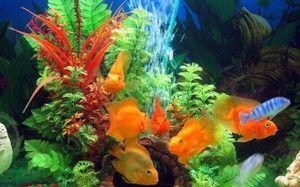 Čo vyzerá akvárium s rybami: výklad snov