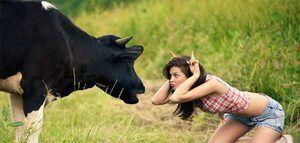 Prečo býk sníva. Interpretácie rôznych snov