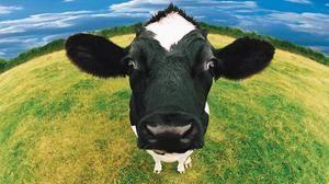 Čo robí sen o kravách - čo hovoria populárne sny o knihách?