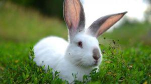 Čo má králik sen? Sny a interpretácie