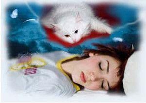 Čo sníša mačka a čo symbolizujú vo sne