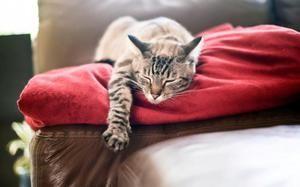 O čom snášali mačky: interpretácia snov
