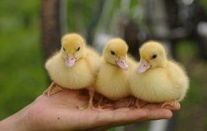 Prečo kačice snívajú v rôznych snoch?