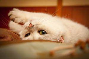 Prostriedky pre mačky v estru