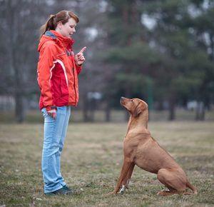 Školenia psov