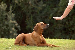Učte psa, aby si ľahol