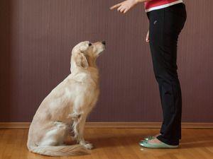 Naučte psa sedieť