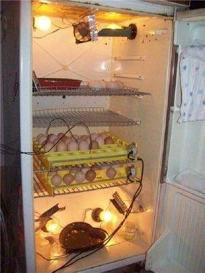 Domáce inkubátor z chladničky