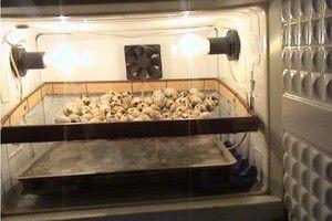 Ako vytvoriť inkubátor z chladničky