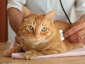Mačka na klinike s veterinárom