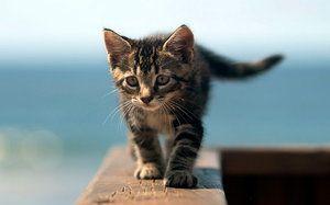 Tipy, ako menovať mačiatka