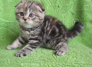 Ako pekné zavolať mačiatko