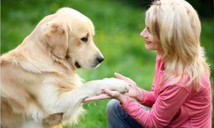 Ako naučiť šteňa dať labky a iné príkazy?
