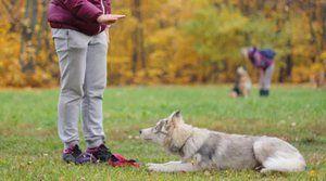 Tím leží v tréningu psov