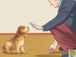 Obliekanie mladého šteňa