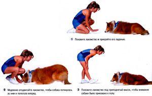Pravidlá pre výcvik psov