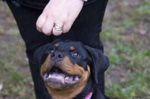 Školenia šteňatých tímov s potešením