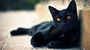 Mená pre čierne mačky