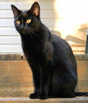 Názov čiernej mačky