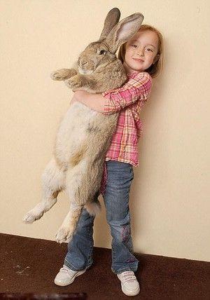 Obrie králik
