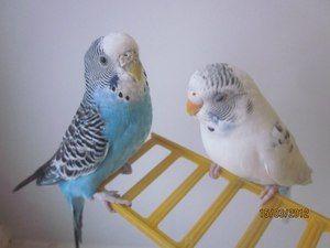 Názov papagája