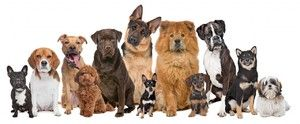 Výber prezývky pre psa
