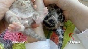 Ako vyzerá novorodené mačiatko?