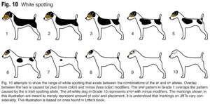 Akými znakmi môžete povedať vek psa