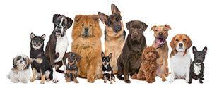 Liečba pre psov