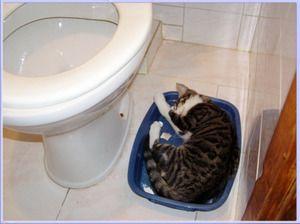 Zásobník na kočky