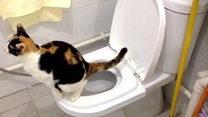 WC miska pre mačku