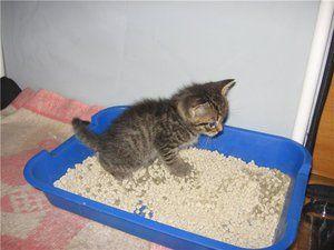 Ako môžem trénovať mačiatko na podnos?