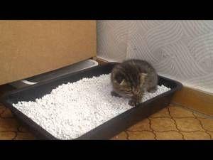 Spôsoby, ako naučiť mačiatko do zásobníka