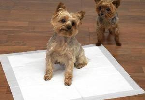 Možnosti výcviku šteňa pre plienku