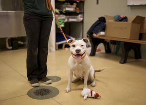 Aké sú spôsoby, ako učiť šteniatka?