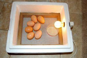Ako vytvoriť inkubátor s vlastnými rukami