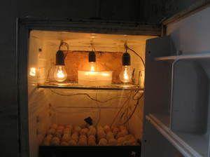Prvky inkubátora