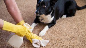 Prečo sa pes piss doma?