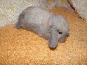 Ako králiky chovajú?