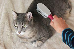 Kombinácia mačky
