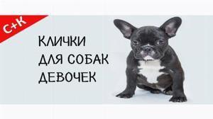 Módne prezývky pre psov