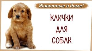 Názvy psov