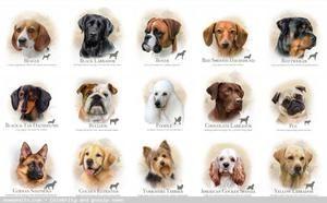 Moderné prezývky psa