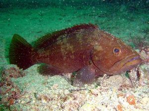 Ryby Čierneho mora
