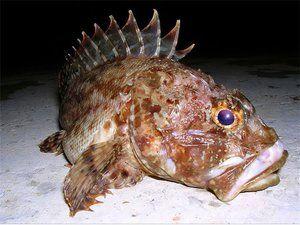 Ryby v čiernom mori