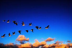 Ktoré vtáky letí najprv na juh