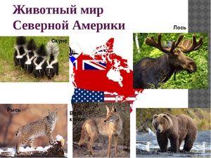 Aké zvieratá žijú v Severnej Amerike?