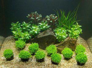 Ktorá pôda pre akvárium a rastliny je lepšia - druh a správna voľba