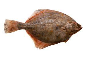 Ako variť ryby